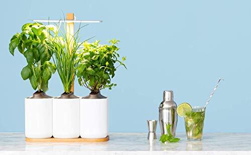 Indoor-Garten: Lilo Smarter