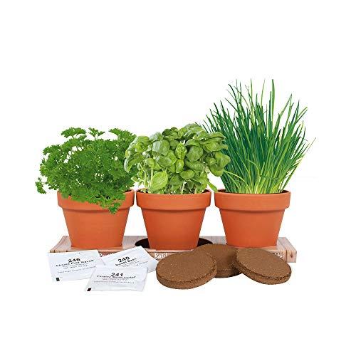 Kräuter Trio Anzuchtset | Basilikum, Petersilie und Schnittlauch züchten | Ein Kräutergarten aus Samen in einzigartigen Terracotta Blumentöpfen | Beliebtes indoor Anzuchtset