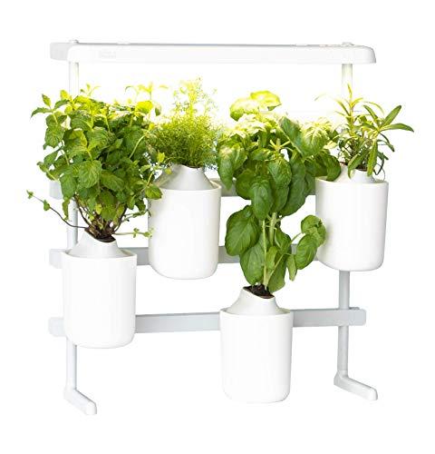 Indoor-Garten: Prêt à Pousser Modulo