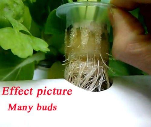 HUKOER Site Grow Kit 36