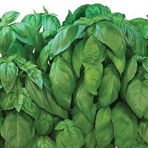 FERRY Bio-Saatgut Nicht nur Pflanzen: Aerogarden SIL Seed Pod 7-Pod