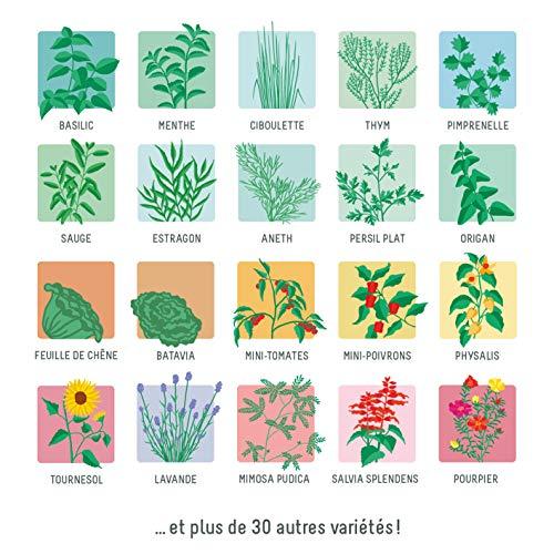 Prêt à Pousser Modulo, Ihr modularer Indoor-Garten - Bauen Sie ganz einfach Ihre eigenen frischen Kräuter, Salate und Gemüse an, das ganze Jahr über
