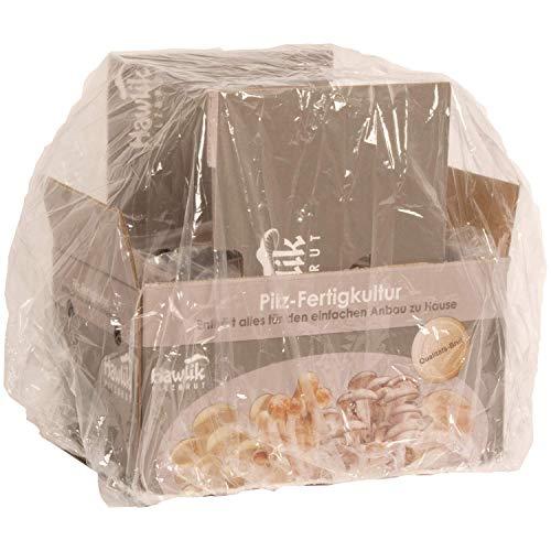 Hawlik Pilzbrut - das Orginal - weiße Champignon Pilz-Zuchtset
