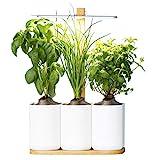 Lilo, Ihr smarter Indoor-Garten ❃ neue Version ❃