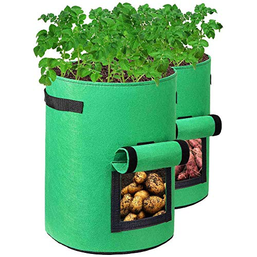 Kartoffelanbau im Eimer