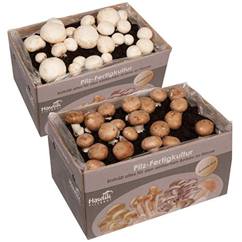 2 X Champignon Pilzkulturen I Probierset I Hawlik Pilzbrut I kinderleicht Pilze selber züchten I ohne Vorkentnisse