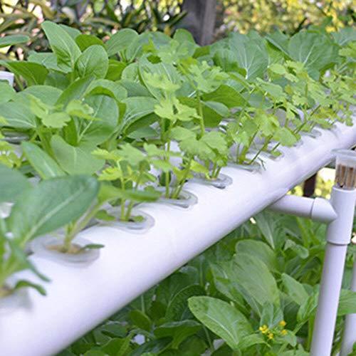 Xian Soilless Hydroponic Grow Vegetable
