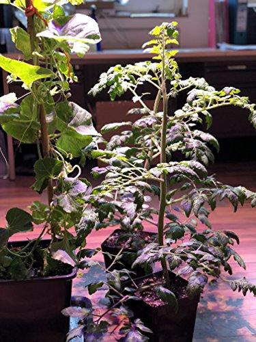Greenception 512W GC-16 Profi COB Grow LED Pflanzenlampe,