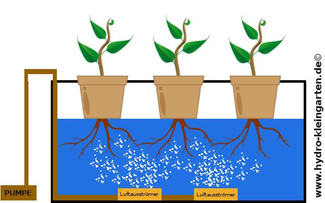 Hydroponik System selber bauen: Aufbau eines Hydroponik Systems (DWC-Methode)
