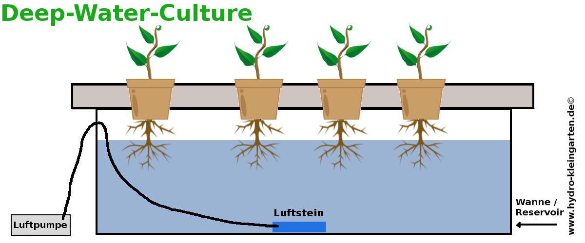 Deep Water Cultur aufbau